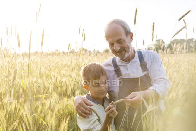 Grand-père agriculteur et petit-fils examinant la récolte de blé rural — Photo de stock