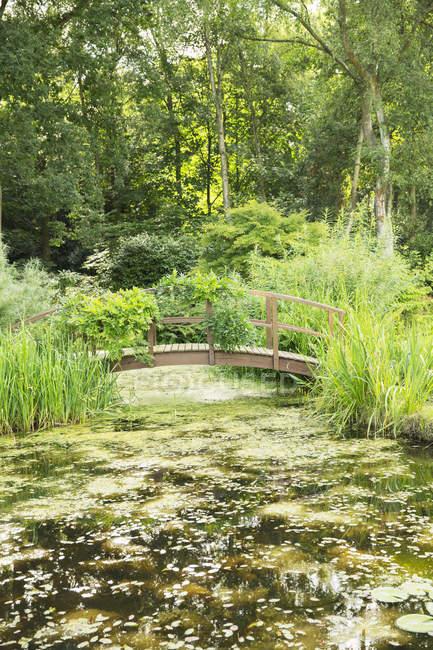 Pasarela de madera sobre estanque - foto de stock