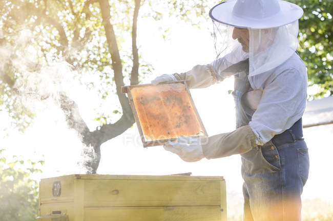 Beekeeper in protective clothing examining bees on honeycomb — Stock Photo