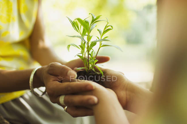 Close up mother and son cupping seedling — Stock Photo