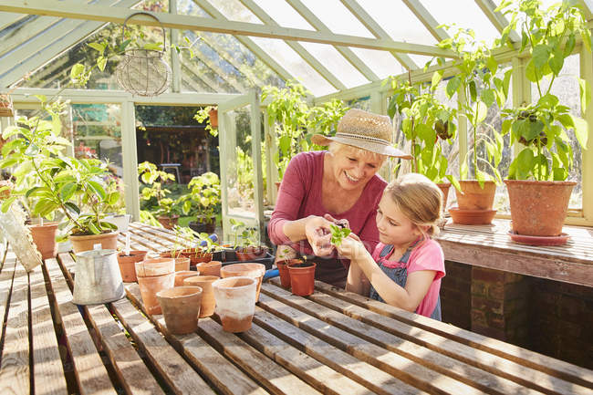 Бабушка и внучка выращивают растения в теплице — стоковое фото