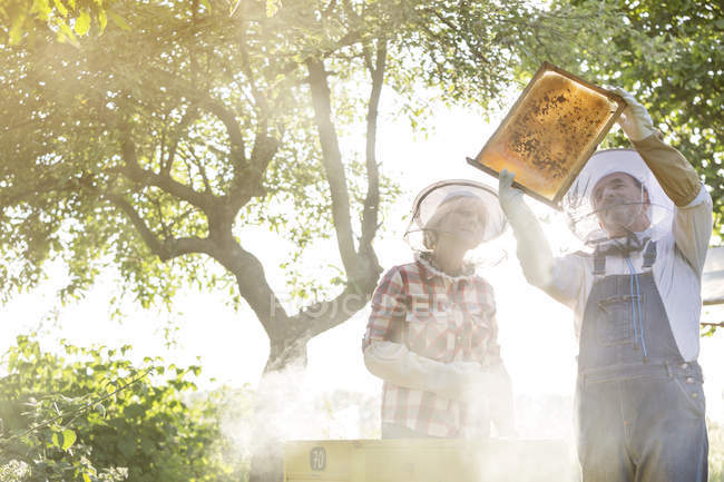 Beekeepers in protective hats examining bees on honeycomb — Stock Photo
