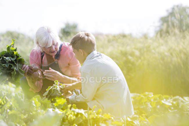 Grandmother and grandson harvesting vegetables in sunny garden — Stock Photo