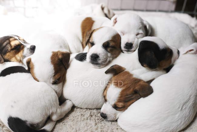 Cachorros durmiendo encima de la otra - foto de stock