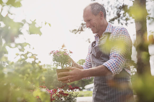 Smiling plant nursery worker examining potted flowers — Stock Photo
