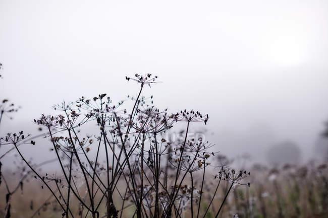 Эфирная туман позади зимние филиалов — стоковое фото