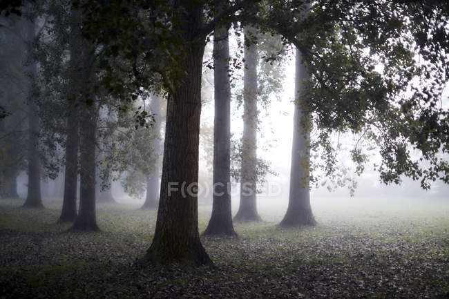 Ethereal fog behind tranquil autumn trees — Stock Photo