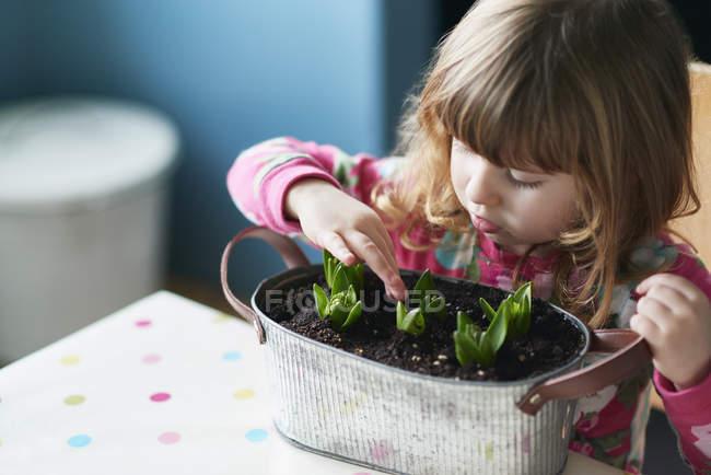 Chica curiosa tocando flores brotando en maceta - foto de stock
