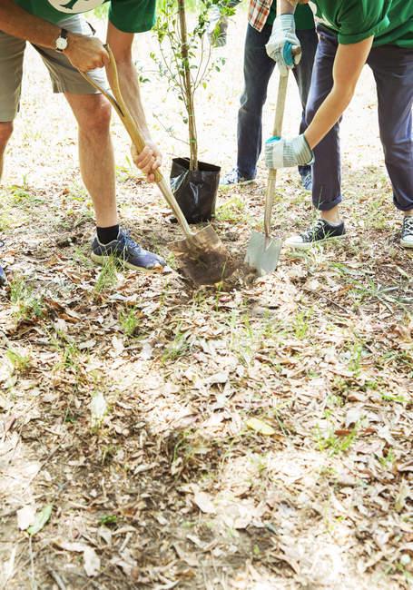 Volontari di ambientalista piantare albero nuovo — Foto stock