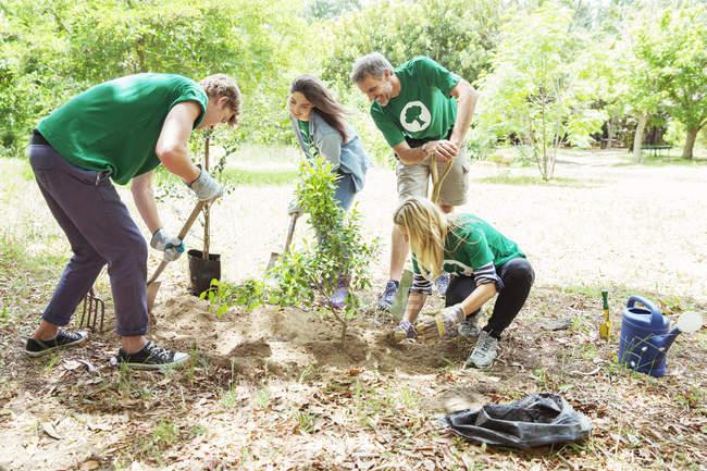 Volontaires écologistes plantant un nouvel arbre — Photo de stock