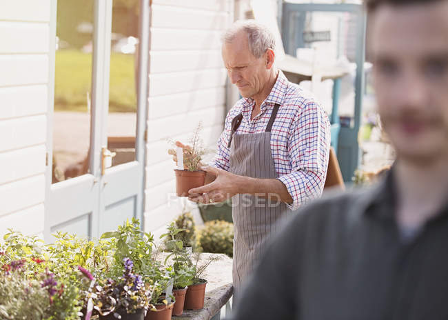 Plant nursery worker examining potted plant — Stock Photo