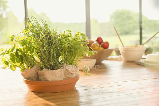 Свіжий горщиках трави на обідній стіл — стокове фото