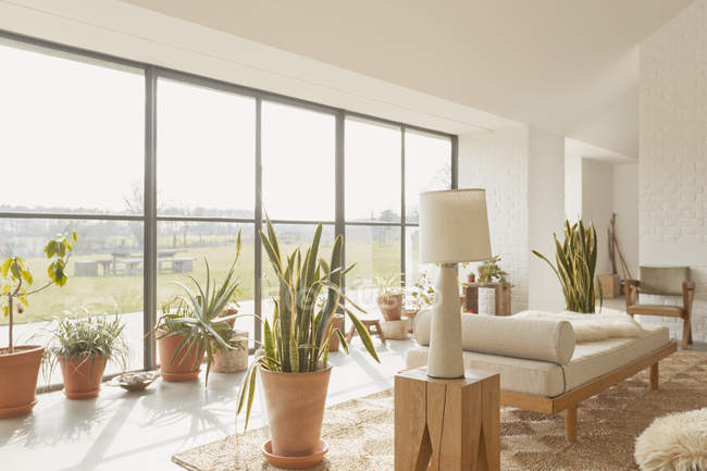 Potted plants in sunny home showcase living room — Stock Photo