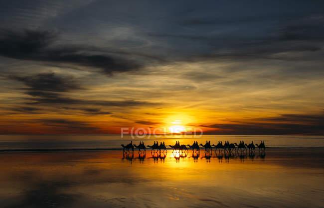 Silhouette di persone che cavalcano cammelli al tramonto, Broome, Australia — Foto stock