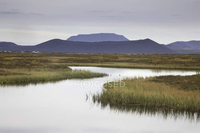 Ruhigem Seewasser mit Pflanzen und Hügeln im Hintergrund — Stockfoto