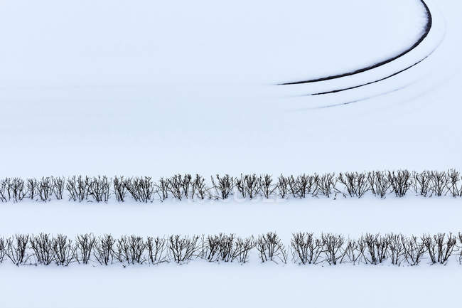 Winter branches in snow covered landscape — Stock Photo