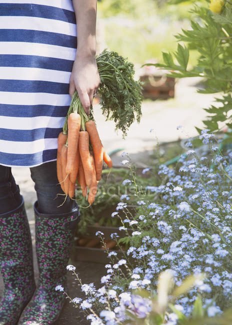 Woman holding bunch of fresh harvested carrots in garden — Stock Photo