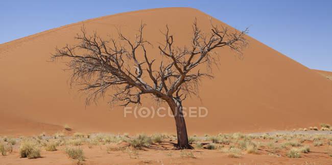 Vue sur arbre nu, herbe sèche et dune de sable dans le désert ensoleillé — Photo de stock