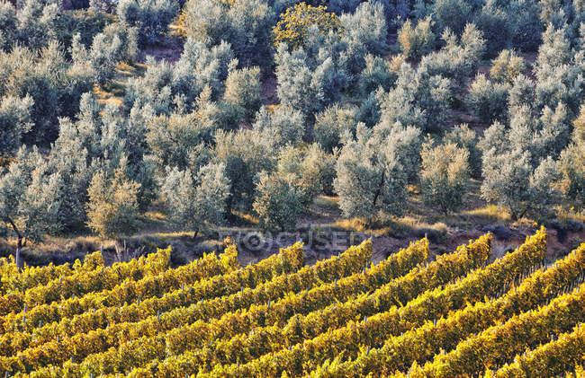 Vista elevata di alberi che crescono accanto al campo alla luce del sole — Foto stock