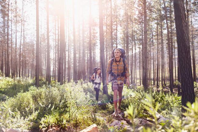 Giovani coppie con zaini trekking nel bosco pieno di sole — Foto stock