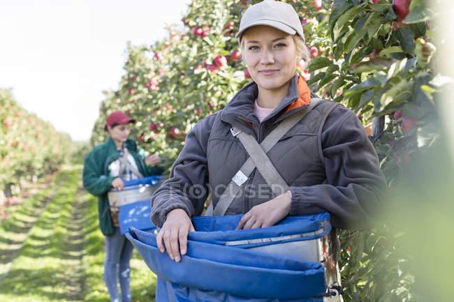Portrait smiling female farmer harvesting apples in orchard — Stock Photo