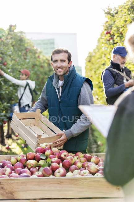 Portrait smiling male farmer emptying harvested red apples into bin in orchard — Stock Photo