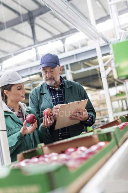 Administrador de Portapapeles y trabajador examinar manzanas rojas en planta procesadora de alimentos - foto de stock