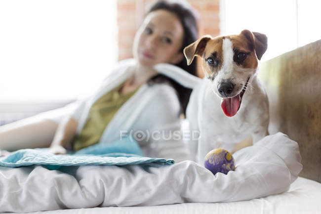 Mulher assistindo Jack Russell Terrier cão com brinquedo na cama — Fotografia de Stock
