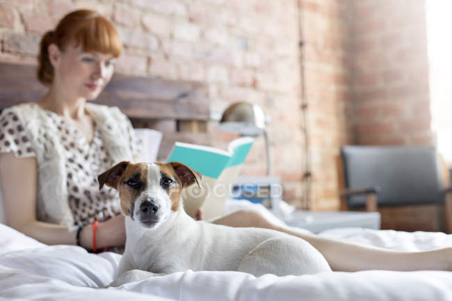 Woman reading book next to Jack Russell Terrier dog on bed — Stock Photo