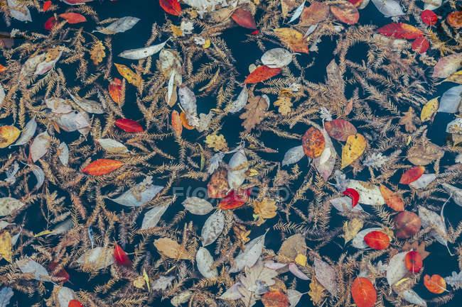 Full frame pattern of autumn leaves — Stock Photo