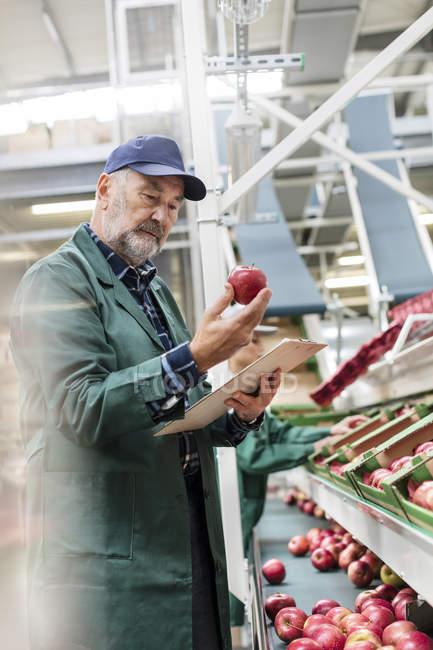Administrador de Portapapeles inspección de manzanas rojas en planta procesadora de alimentos - foto de stock