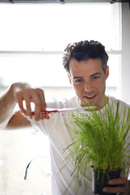 Человек, резки ножницами potted plant. — стоковое фото