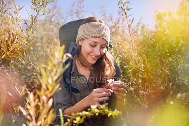 Mujer joven senderismo, recoger flores en el campo soleado - foto de stock