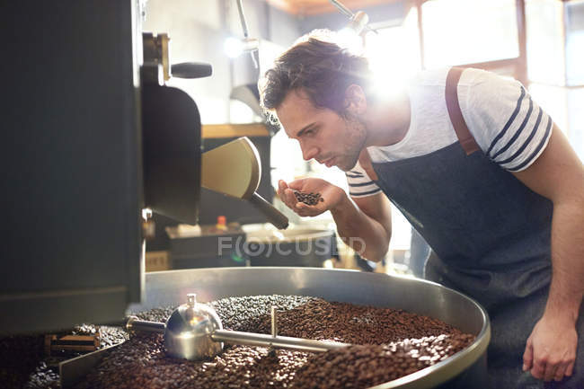 Male coffee roaster smelling coffee beans at roaster — Stock Photo
