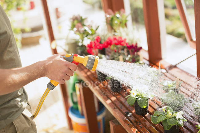 Man gardening watering potted plants with hose sprayer in greenhouse — Stock Photo