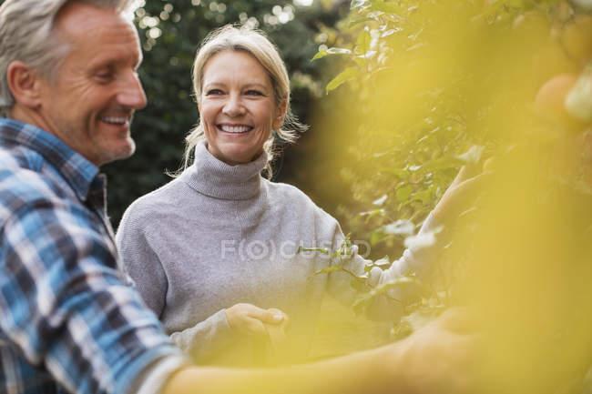 Reifes kaukasisches Paar pflückt Früchte im heimischen Garten — Stockfoto