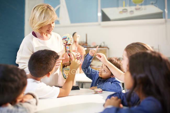 Lehrer und neugierige Studenten mit anatomischen Modells im Science center — Stockfoto