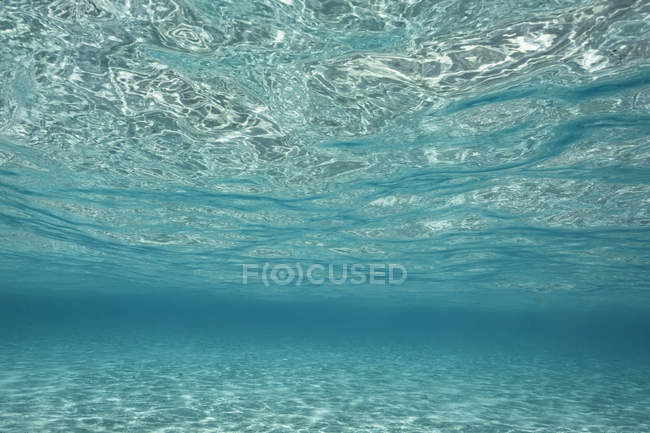 Underwater view tranquil blue ocean, Vava'u, Tonga, Pacific Ocean — Stock Photo