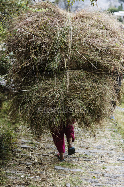 Man carrying bundles of grass, Supi Bageshwar, Uttarakhand, Indian Himalayan Foothills — Stock Photo