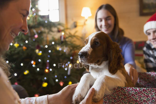 Family with puppy dog in Christmas gift box — Stock Photo