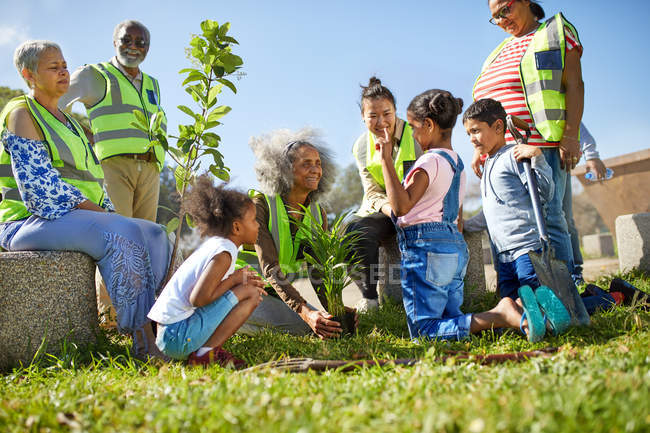Volunteers planting trees in sunny park — Stock Photo