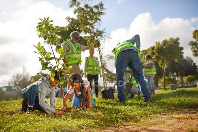Voluntários plantando árvores no parque ensolarado — Fotografia de Stock