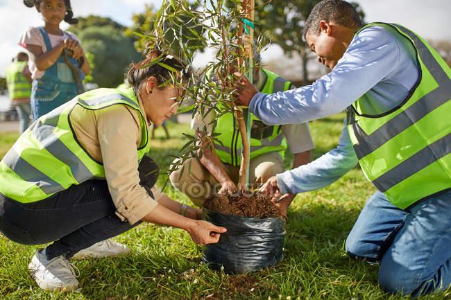 Volunteers planting tree in park — Stock Photo