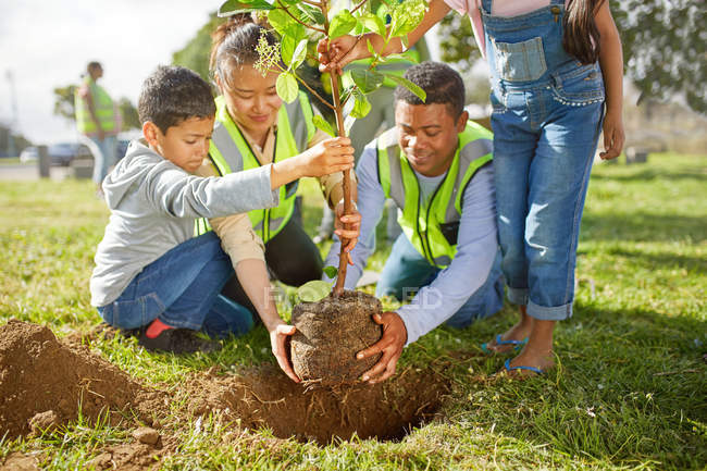 Family volunteers planting tree in sunny park — Stock Photo