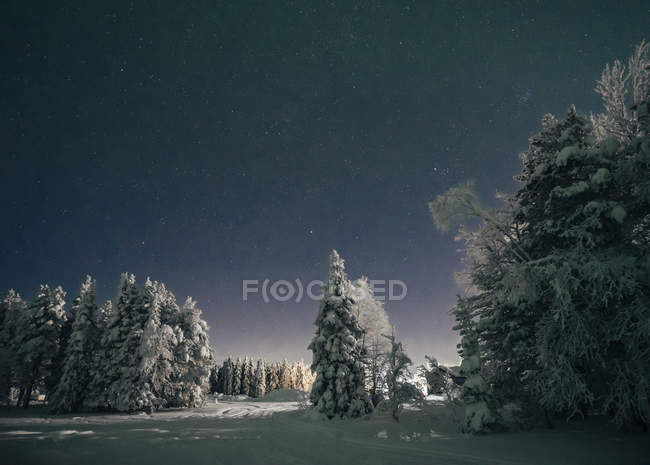 Starry night sky over idyllic snow covered trees, Sweden — Stock Photo