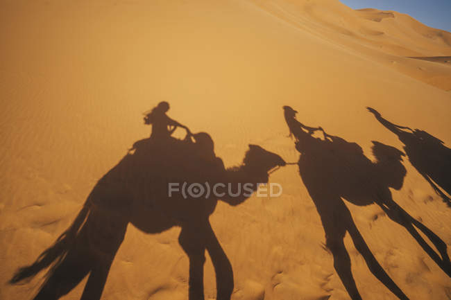 Shadows of people riding camels in sandy desert, Sahara, Morocco — Stock Photo