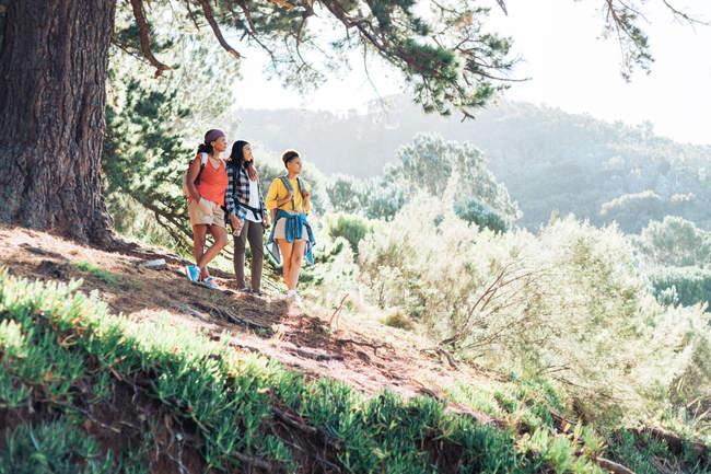 Mutter und Töchter wandern im sonnigen Wald — Stockfoto