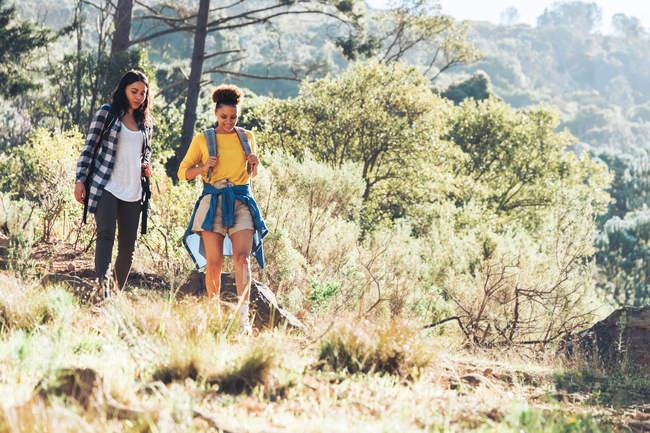 Giovani amici escursioni nei boschi soleggiati — Foto stock