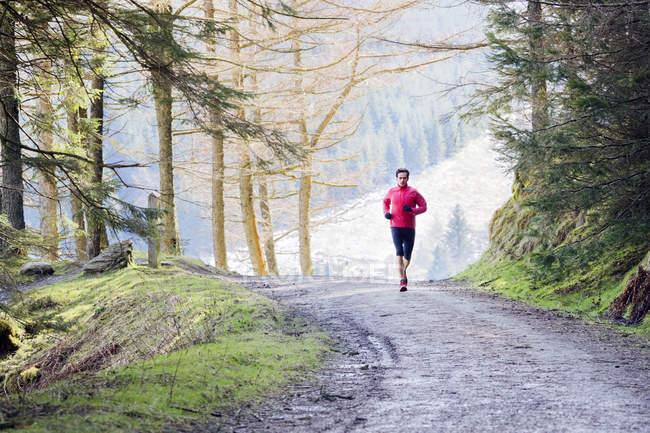 Человек бегает по тропе в лесу — стоковое фото
