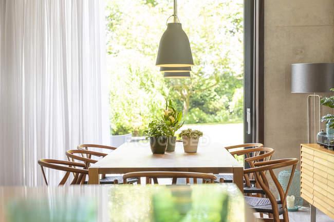 Plantas na mesa abaixo luzes pingente na sala de jantar moderna — Fotografia de Stock